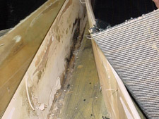 Mould behind baseboard